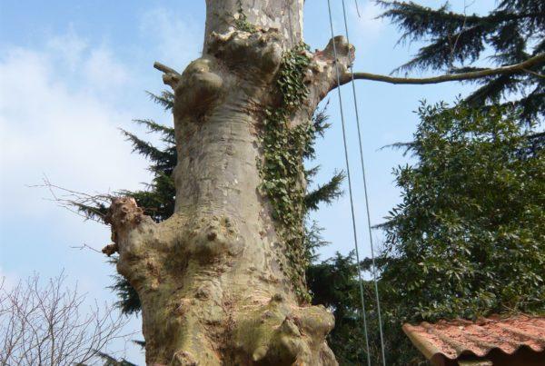 démontage du tronc